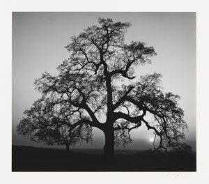 ansel-adams-oak-tree-sunset-city-sierra-foothills-california-1962